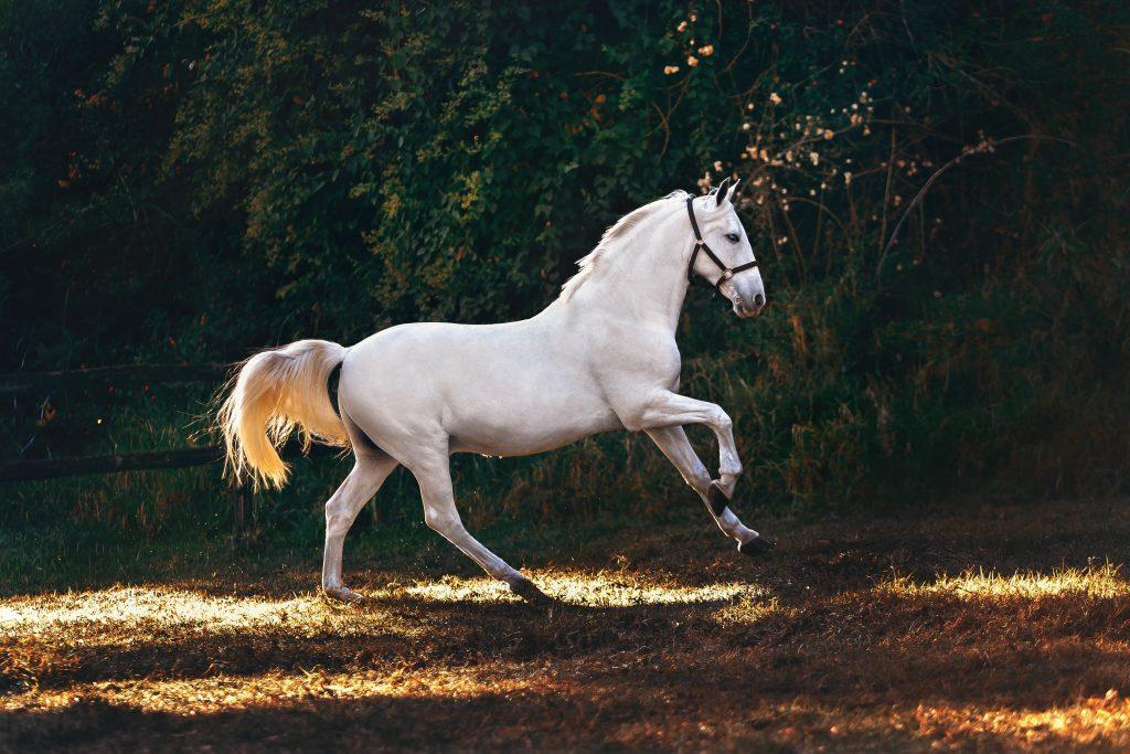 อาหารม้า , ม้า